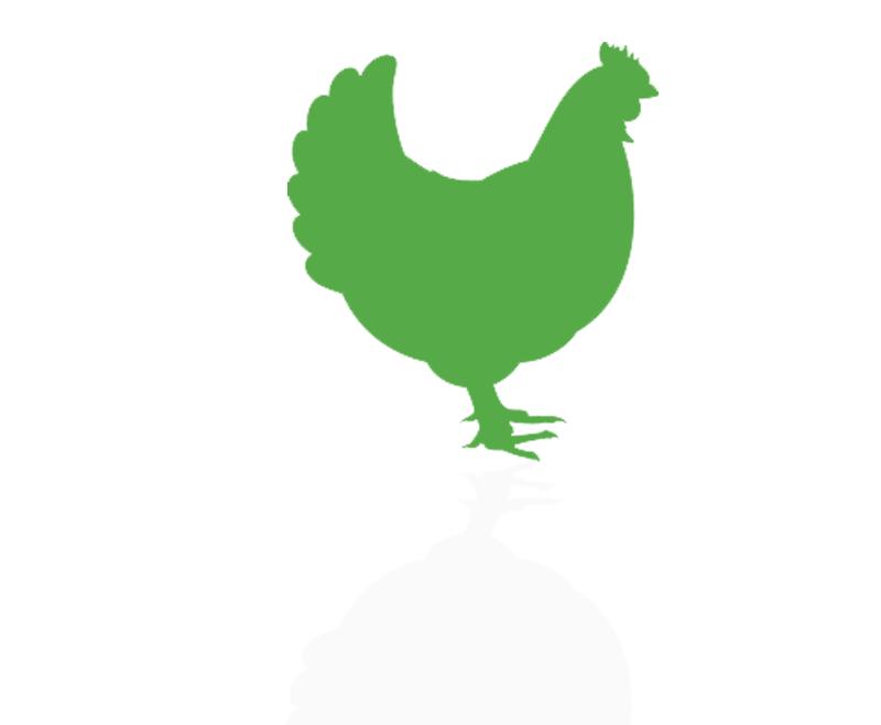 نرم افزار حسابداری خوراک دام و طیور