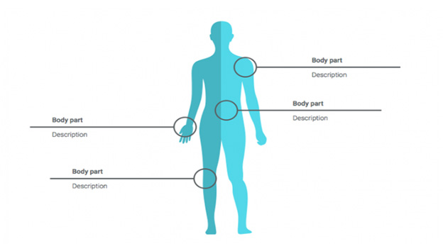 نمودار بدن انسان